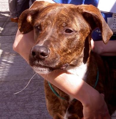 dog training adoption