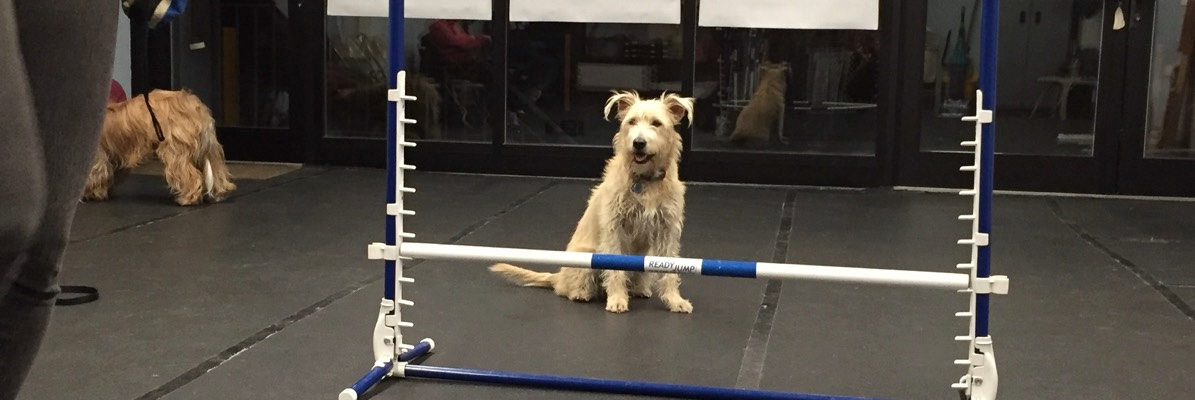 NYC Dog Agility