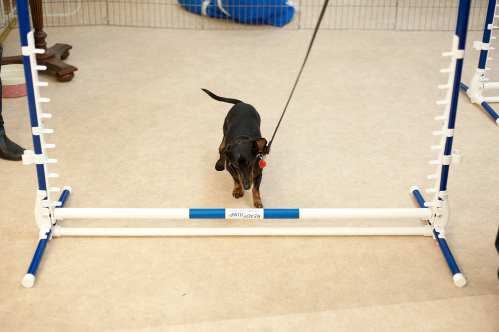 how to make a wobble board for dog agility