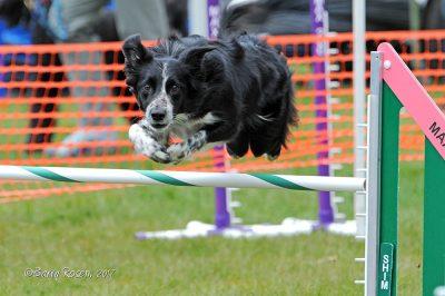 dog agility Brooklyn